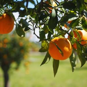 naranjas - snature