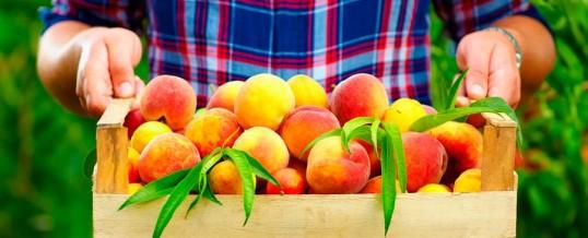 Exportadores de Frutas: reconocimiento internacional