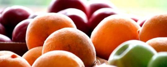 Exportar fruta de hueso a nuevos mercados